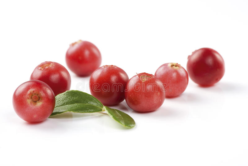 Cranberries on white stock image