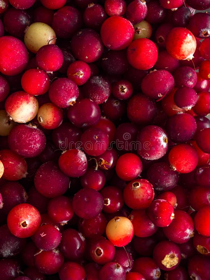 cranberry Υπόβαθρο των βακκίνιων τρόφιμα μπουλεττών ανασκόπησης πολύ κρέας πολύ στοκ εικόνες με δικαίωμα ελεύθερης χρήσης