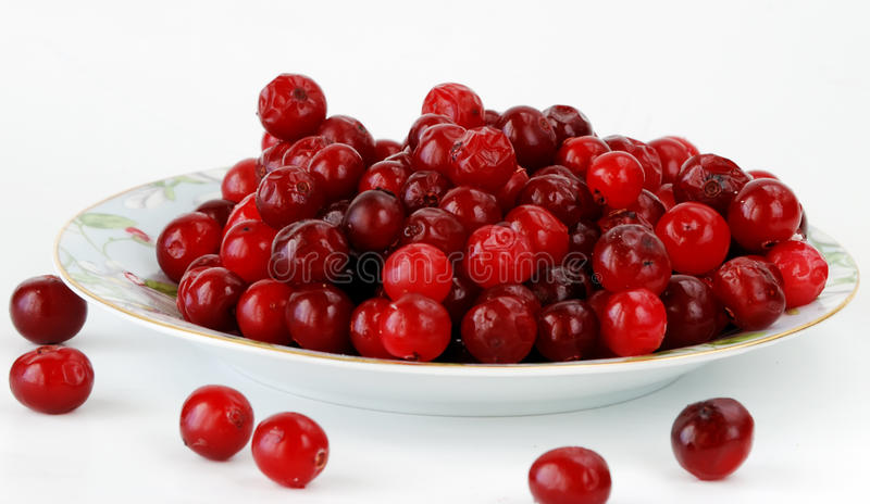 Cranberry. Northern berry a cranberry in a plate on white background royalty free stock photo