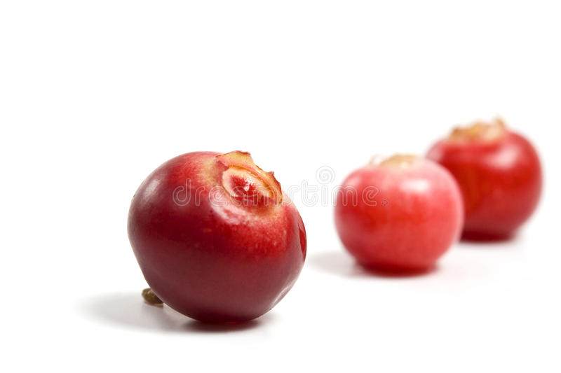 Download Cranberry Stock Photography - Image: 12808962