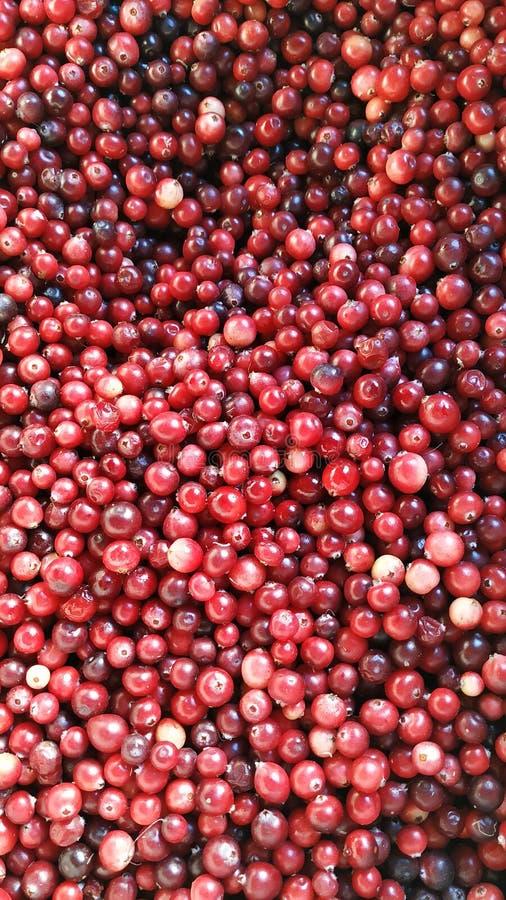 cranberry stock afbeeldingen