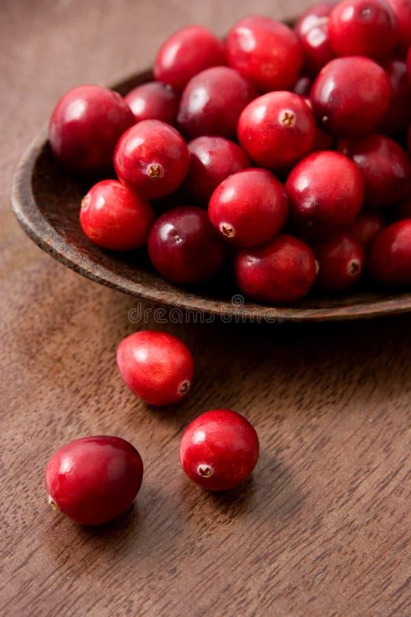 cranberry arkivbild