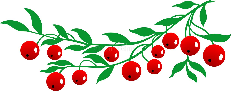 cranberry royaltyfri illustrationer