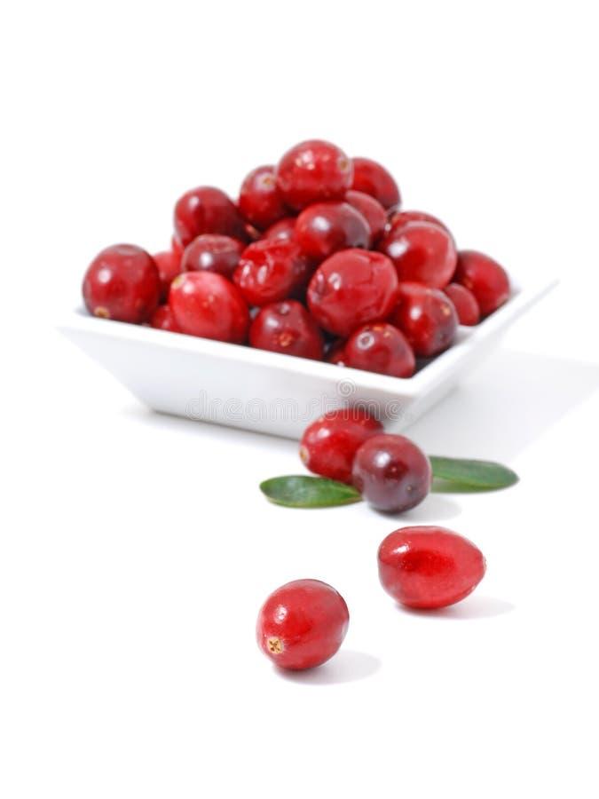 cranberry arkivfoton