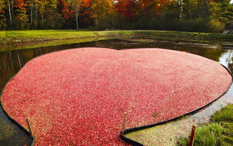 Cranberry bagno w postaci serca zdjęcia stock