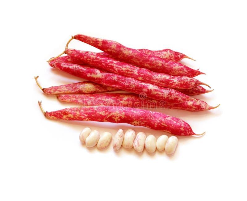 Cranberry Beans royalty free stock photos