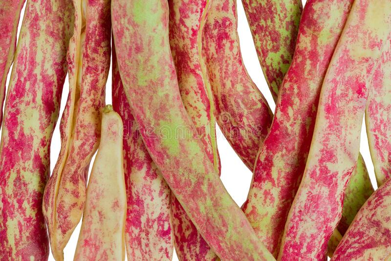 Close up of Cranberry Beans stock image