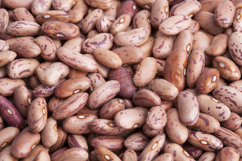 CRANBERRY BEANS royalty free stock photography