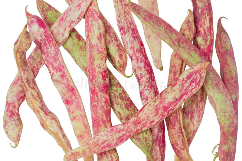 Several Cranberry Beans royalty free stock image