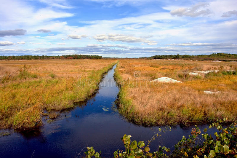 Cranberry Bog and Irrigation Canal In New Jersey royalty free stock photography