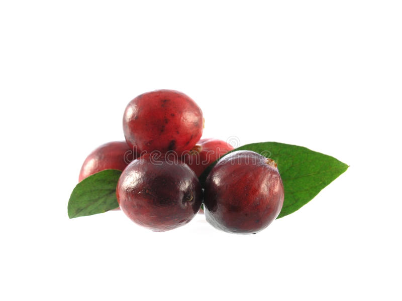 Download Cranberry stock image. Image of isolated, small, berry - 34303319