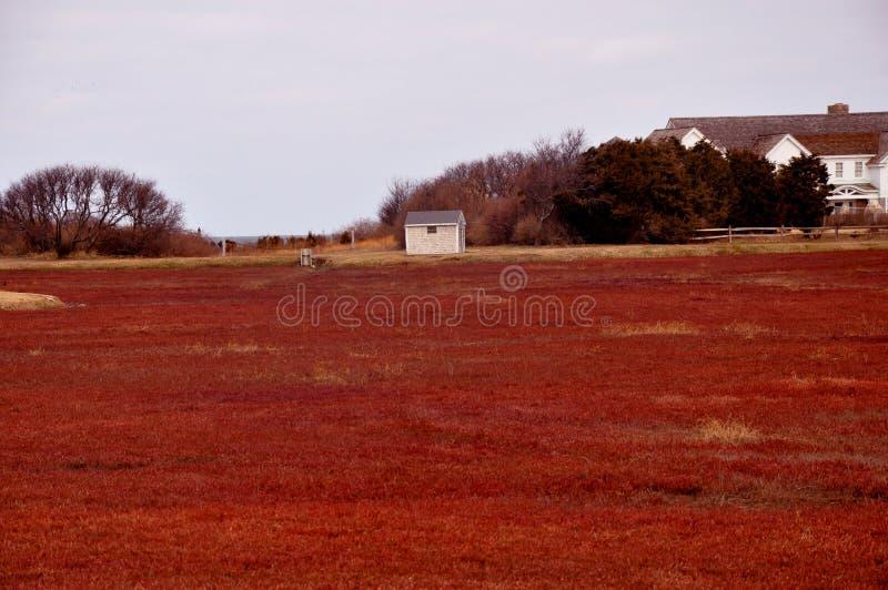 cranberry för myruddtorsk royaltyfri bild