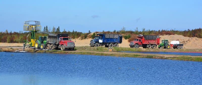 Cranberry gospodarki wodnej rolny zbierać obrazy royalty free