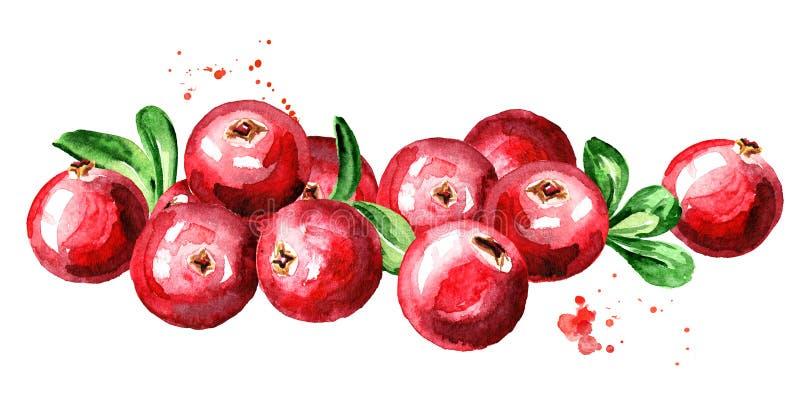 cranberry Hög av nya mogna bär med sidor Räcka den utdragna vattenfärgillustrationen som isoleras på vit bakgrund royaltyfri illustrationer