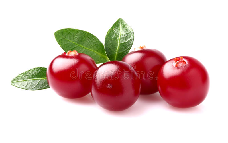 Cranberry with leaves royalty free stock photos