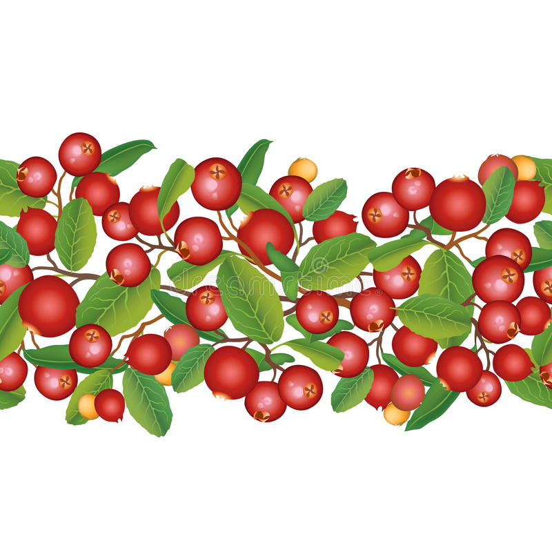 Cranberry seamless background. Ripe red cranberries with leaves. Vector illustration. stock illustration