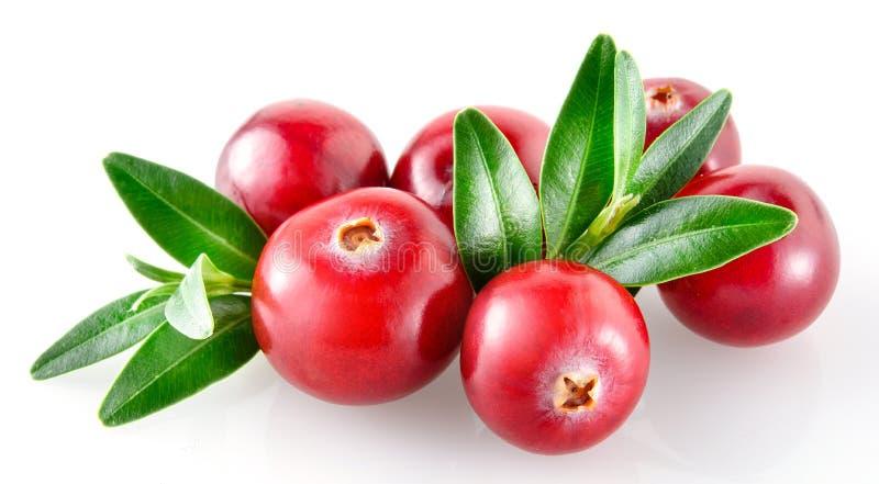 cranberry Verse bessen die op witte achtergrond worden geïsoleerd stock foto