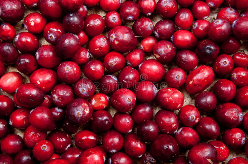 Cranberry wallpaper stock images