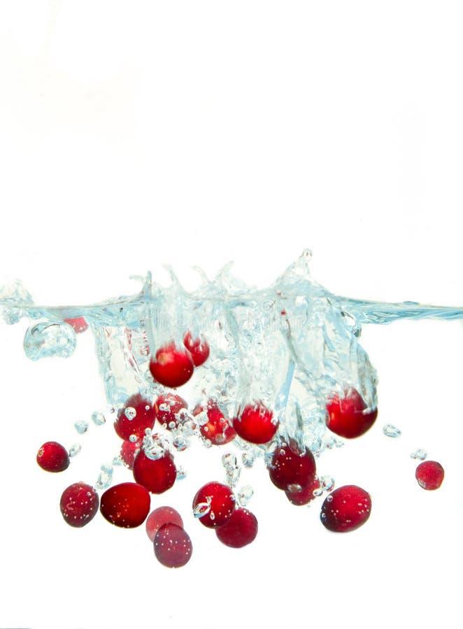 cranberryfärgstänk royaltyfri bild