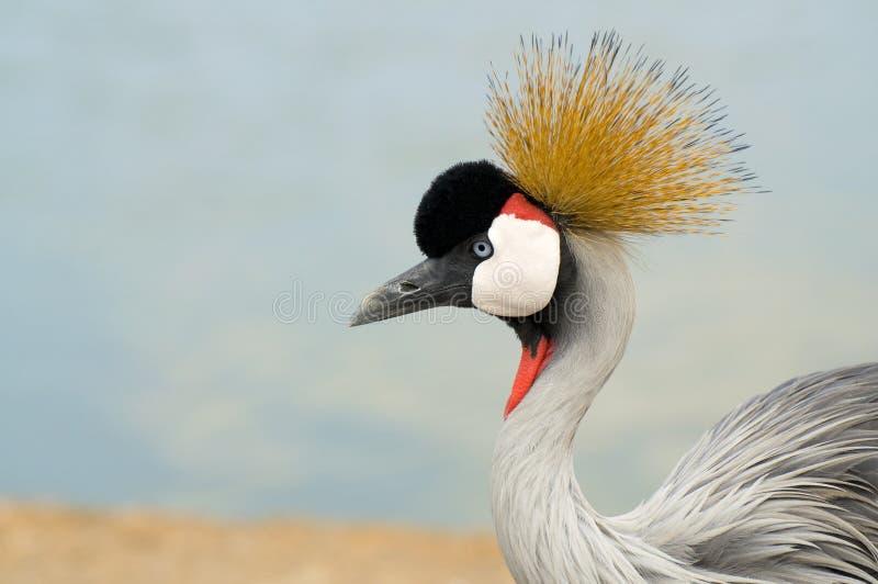 Crane Bird Staring Stock Images