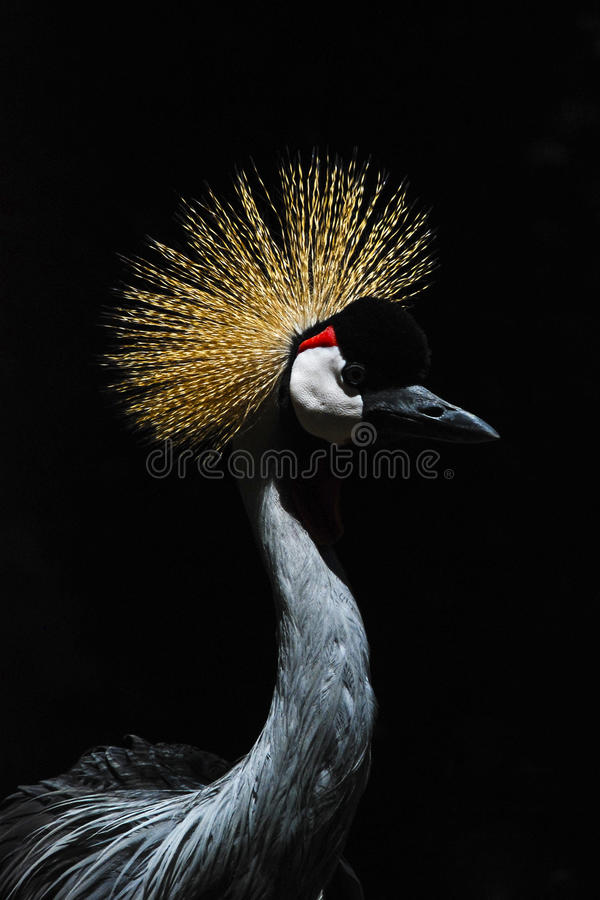 Crane on black backdrop royalty free stock photography