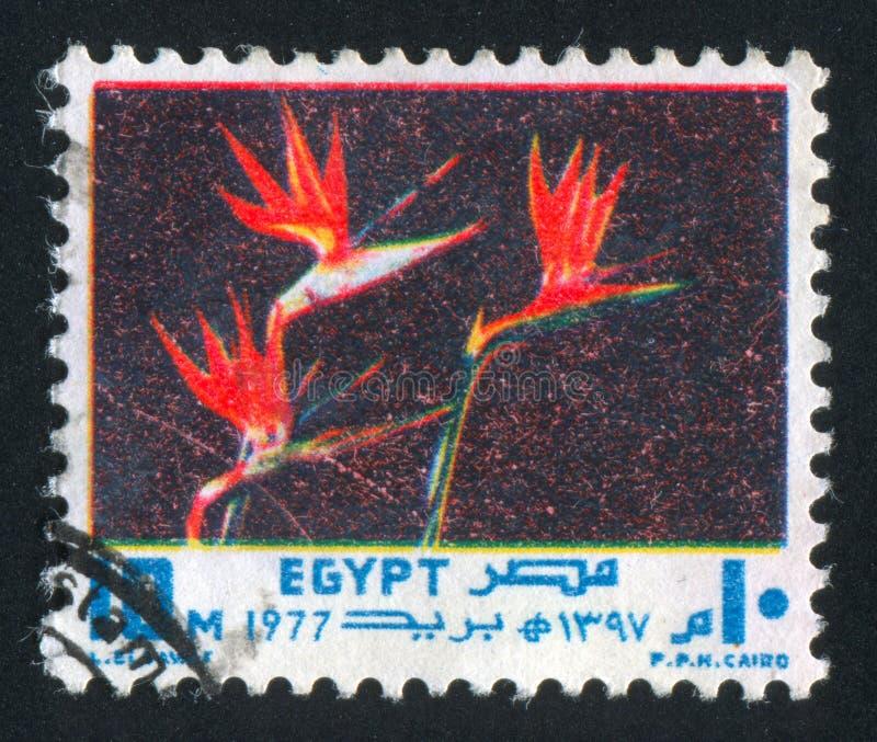 Crane Flower royalty-vrije stock afbeelding