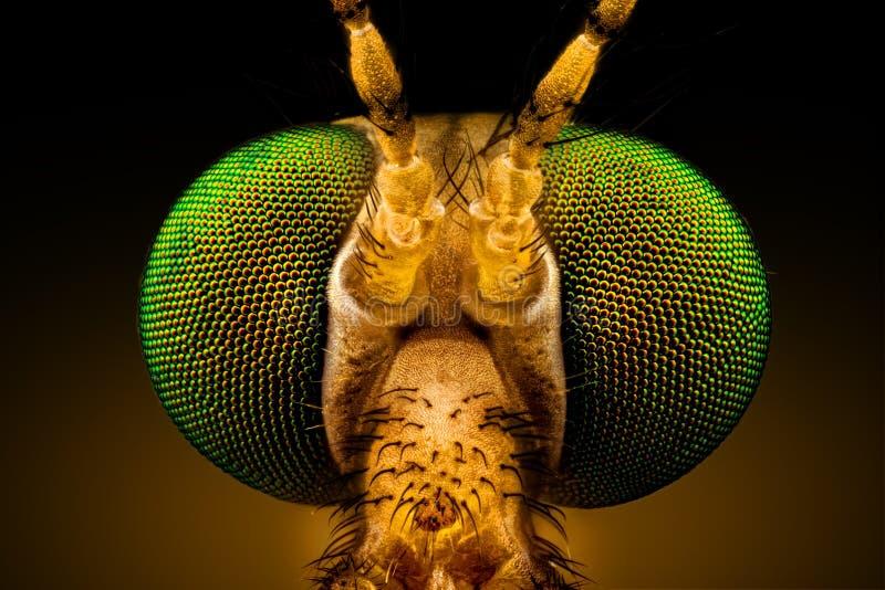 Crane Fly de ojos verdes imágenes de archivo libres de regalías