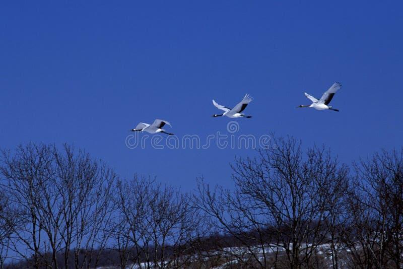 crane latać zdjęcia stock