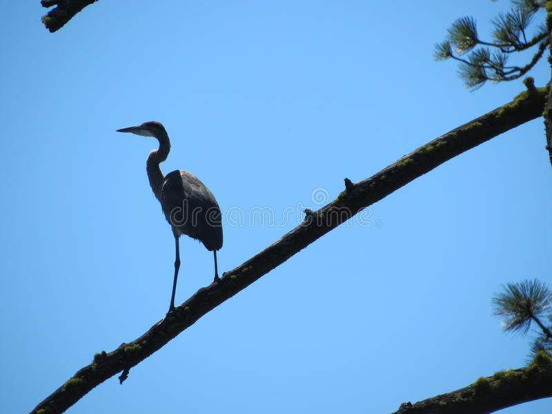 Crane Perch stockbild