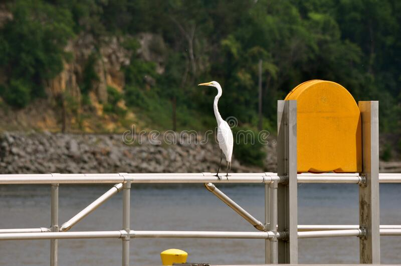 A Crane Pose On A Handrail. Need a river walk in Minnesota royalty free stock image
