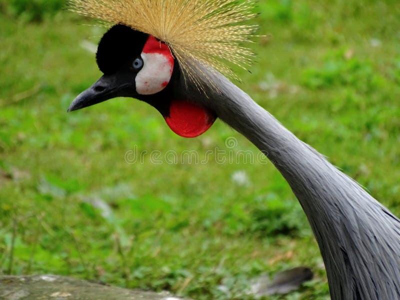 Crane Standing en parque zoológico en Baviera Alemania en Augsburg foto de archivo libre de regalías