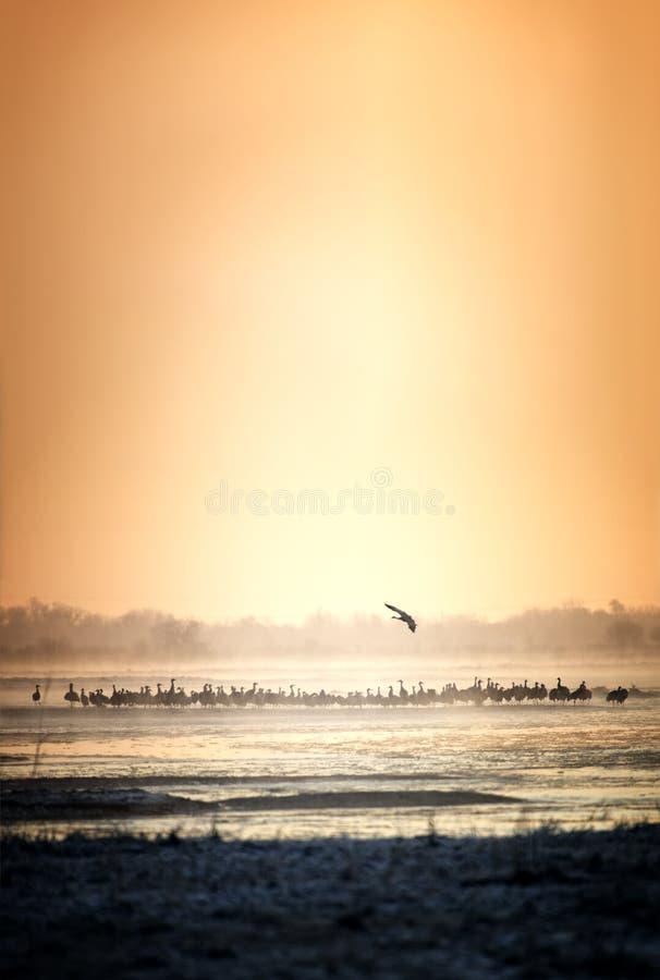 Crane Sunset royalty-vrije stock foto's