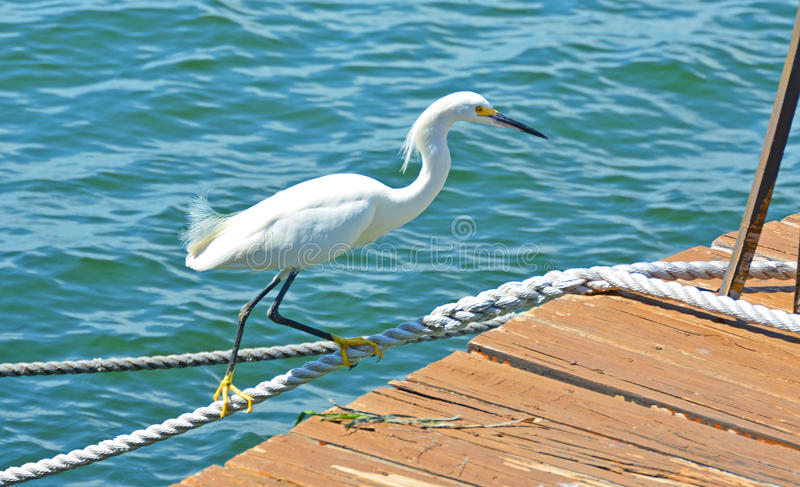 A Crane Walks the Rope over Blue Water stock photography