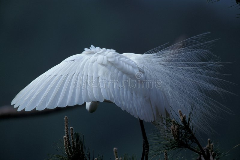 Download Cranes Stock Photography - Image: 77342
