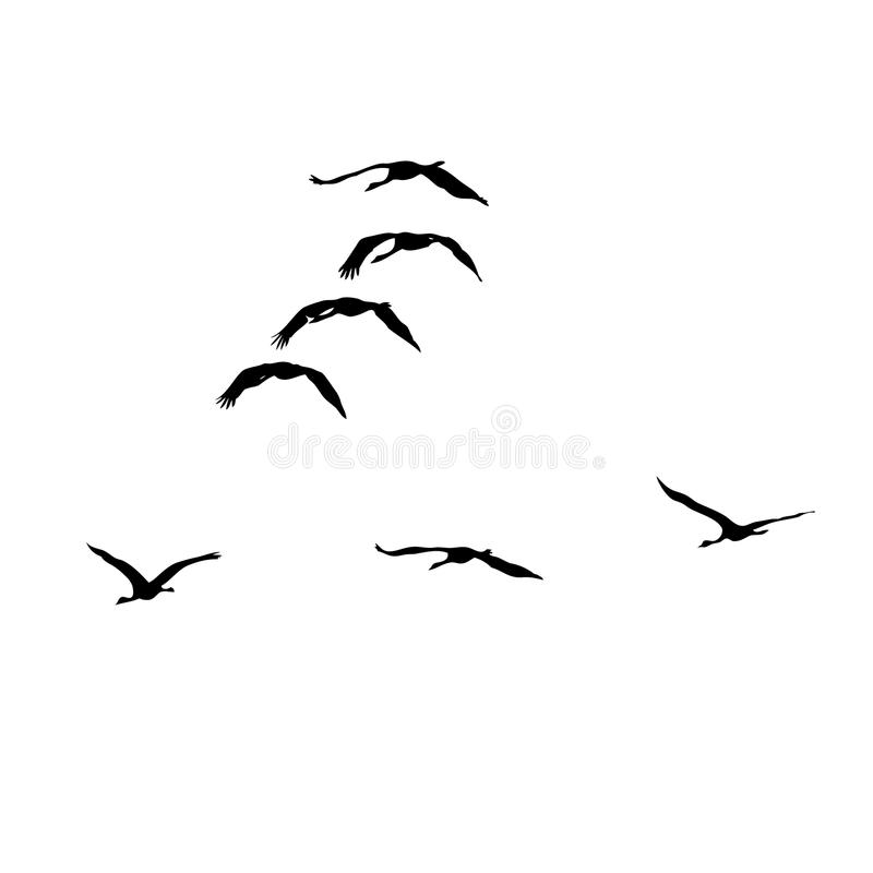 Cranes Fly In Formation Royalty Free Stock Images