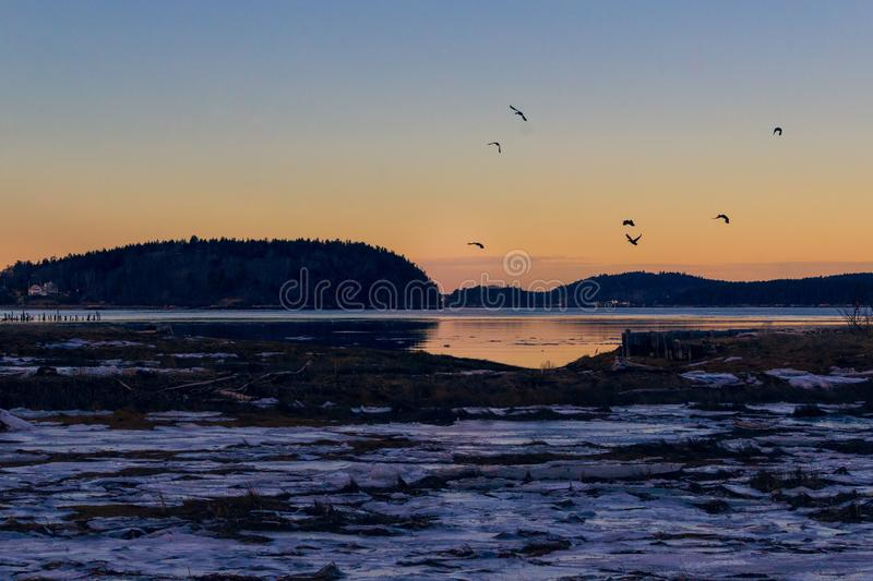 Cranes flying over the lake at dusk in wintertime stock images