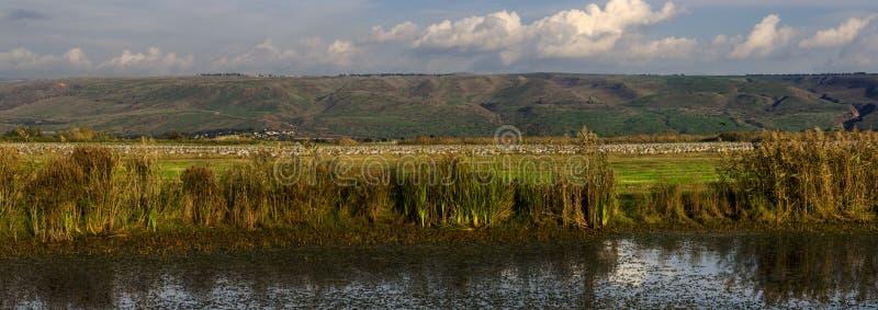 Cranes at nature Panoramic view stock images