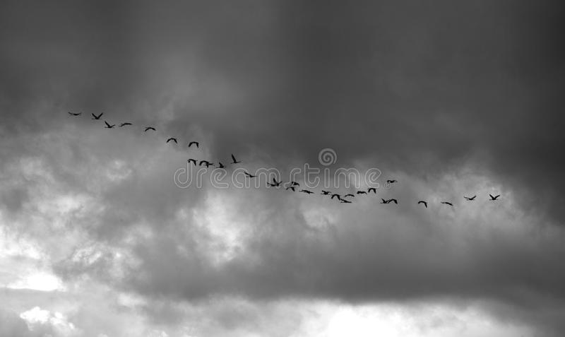 Download Cranes Over Grey Stormy Sky Stock Photo - Image: 26654130