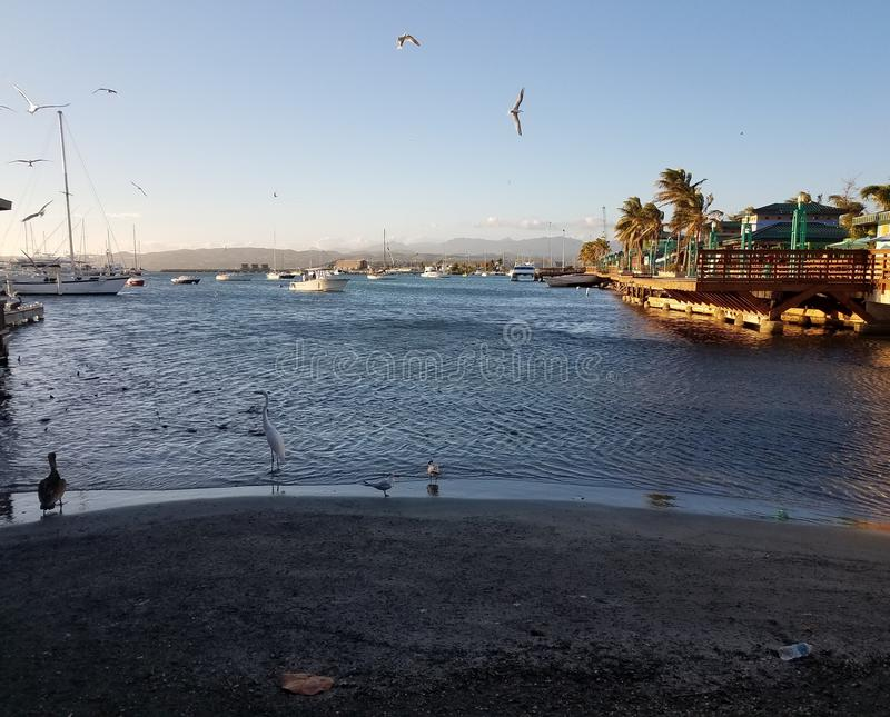 Cranes, pelicans, fish, and boats in La Guancha in Ponce, Puerto Rico. With boardwalk stock photos