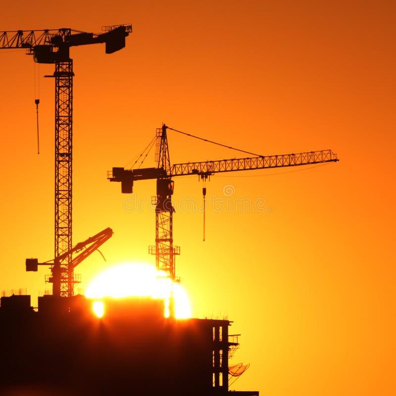 Cranes at sunrise stock images