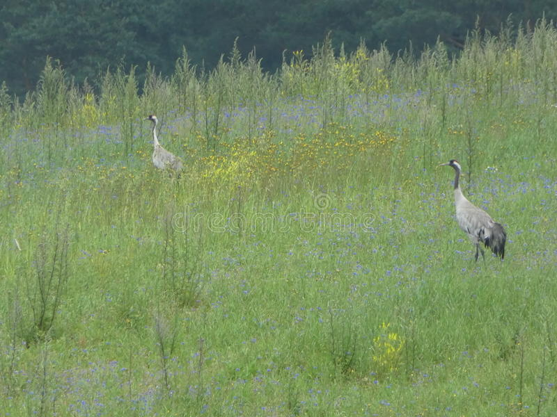 Cranes royalty free stock photography
