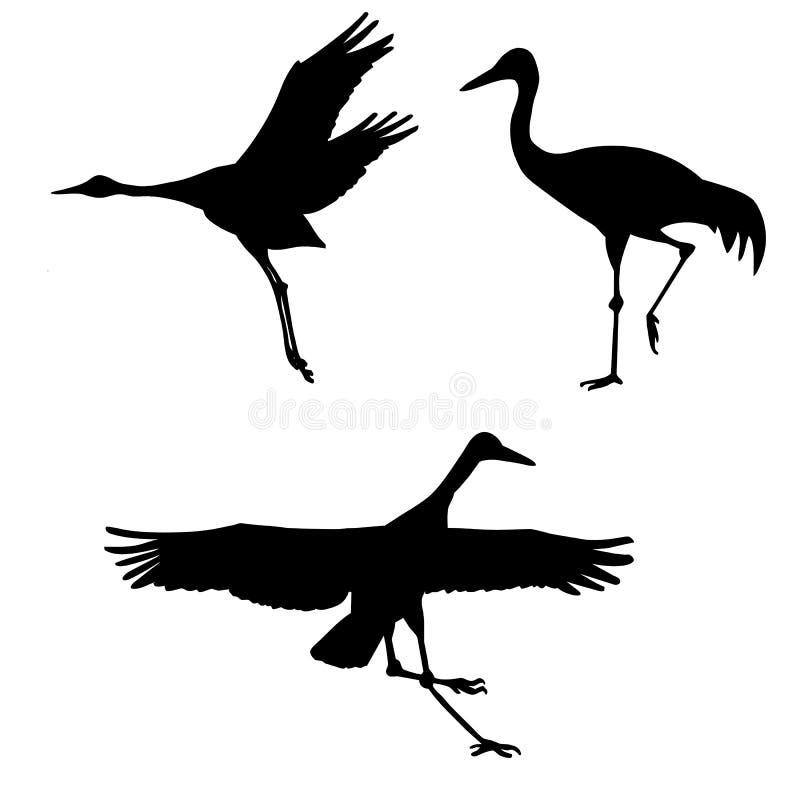 cranes on white background