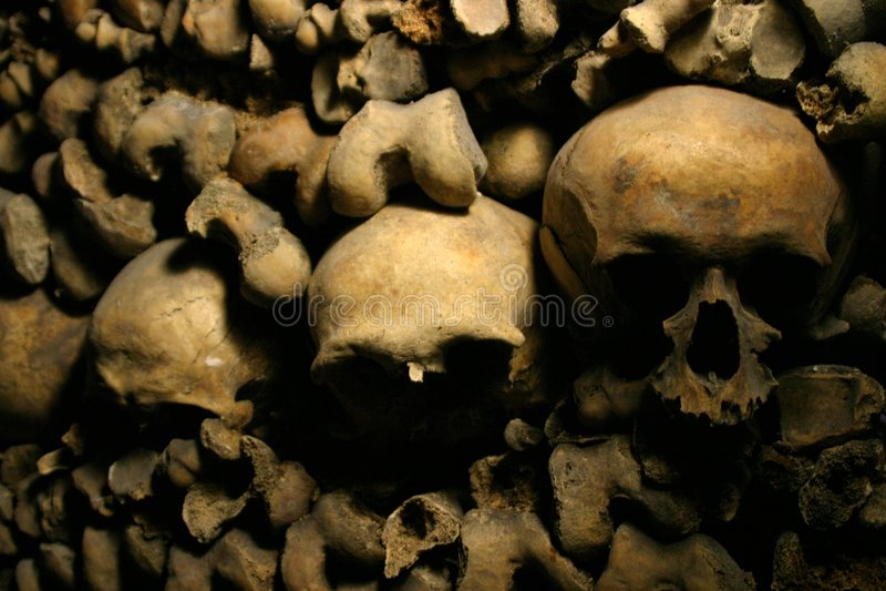 Crani fotografia stock