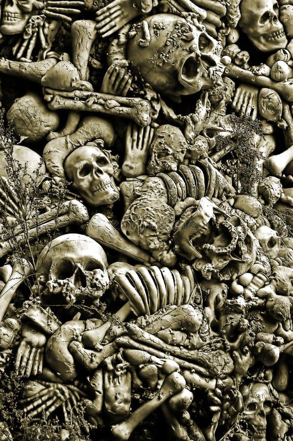 Crani ed ossa Assorted immagine stock