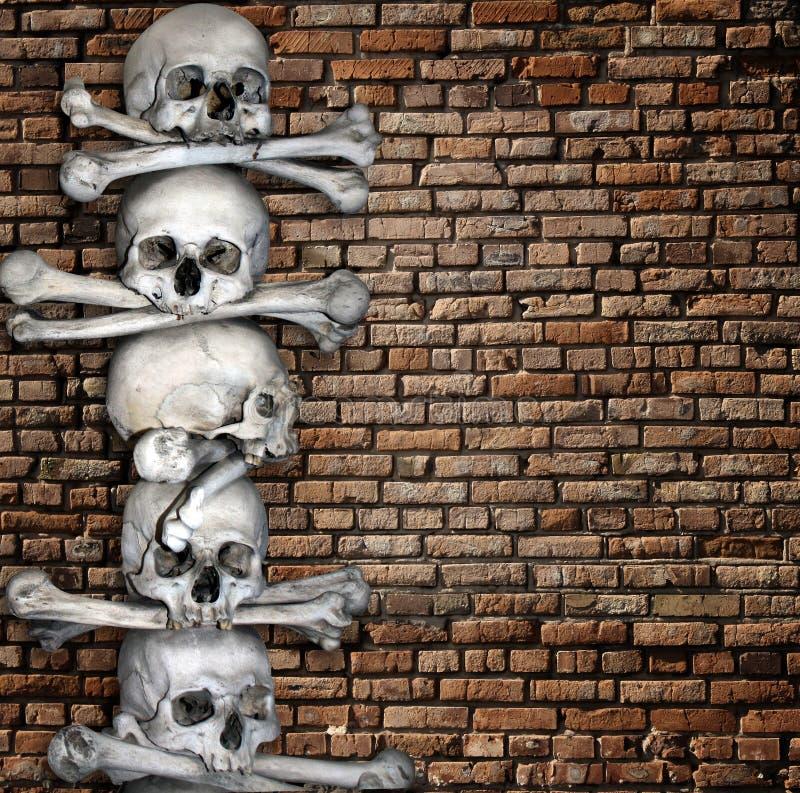 Crani ed ossa umani royalty illustrazione gratis