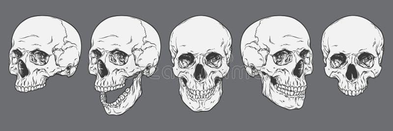 Crani umani anatomicamente corretti messi isolati Disegnato a mano illustrazione vettoriale