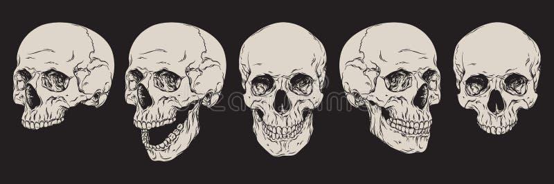 Crani umani anatomicamente corretti messi isolati Linea disegnata a mano illustrazione di vettore di arte illustrazione vettoriale
