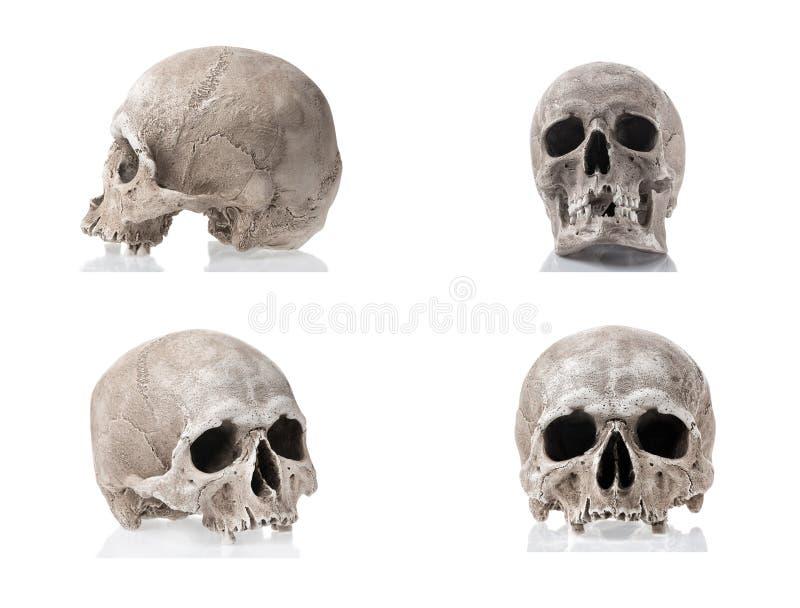 Crani umani isolati su fondo bianco con le riflessioni Insieme del collage di vista frontali laterali e Concetto della medicina e immagine stock