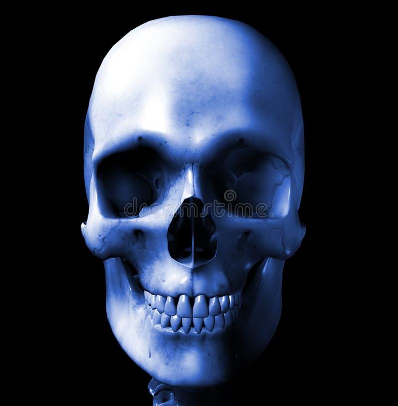 Cranio 7 illustrazione vettoriale