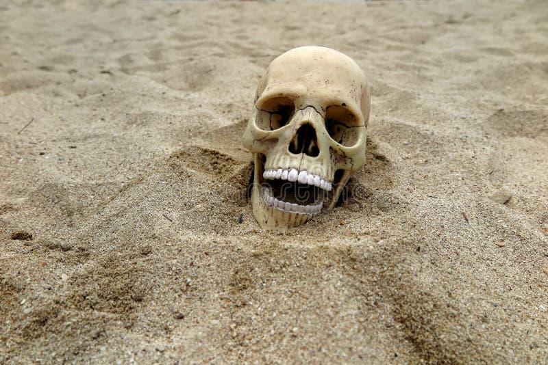 cranio immagini stock